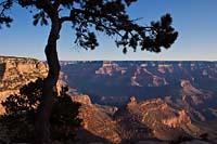 Grand Canyon Grand Canyon Winter Landscape