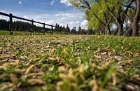 Farm to Market Rd Summer Landscape