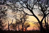 Botswana Sunrise Okavango Delta, Botswana Summer Sunrise