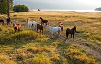 Good Morning Horses Whitefish Lake, MT Summer Aerial