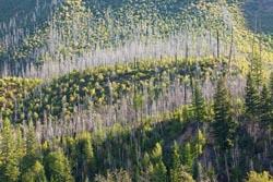 North Fork Burn Columbia Falls Summer Landscape