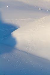 Leaving just tracks behind Golden, Canada Winter Landscape