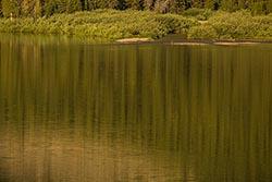Moose with reflection Glacier Park Summer Wildlife