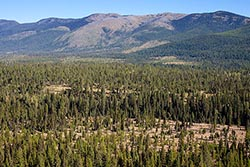 3 Forks of Lazy Creek For Sale Whitefish, MT Summer Aerial