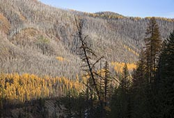 Larch on the North Fork North Fork Flathead Fall Landscape