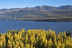 Larch changing color over Whitefish Lake Whitefish Lake, MT Fall Aerial