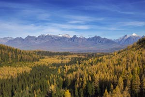 Sea of Larch over Red Meadow Pass