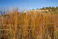 Smith River Spring Landscape