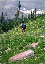 Glacier Park Spring Hiking