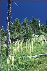 Jewel Basin, MT Winter Landscape