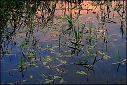 Plummer Lake Spring Landscape