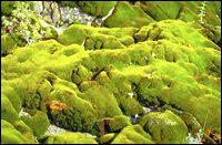 Salmon River Spring Landscape
