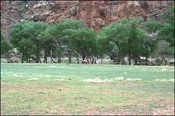 Green River Spring Landscape