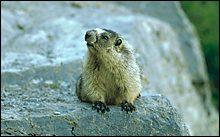 Glacier Park Summer Critters