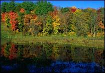 Pelican Lake, MN Fall Landscape