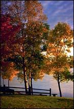 Lake Ida, MN Fall Landscape
